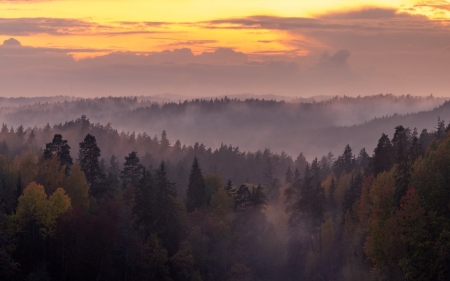 Forests of Latvia - Latvia, forests, panorama, mist