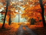 Morning in Autumn Forest