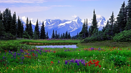 Heavenly Meadows Mountains Nature Background Wallpapers On Images, Photos, Reviews