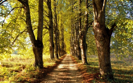 Autumn Avenue in Latvia - autumn, trees, alley, avenue, Latvia, road