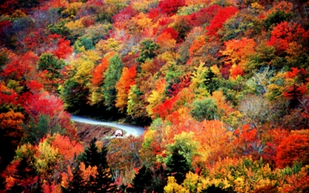 New England In Autumn Forests Nature Background Wallpapers On Desktop Nexus Image 2516779