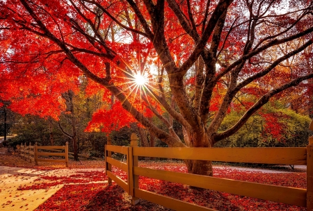 Autumn glare - park, trees, foliage, fence, fall, red, autumn, glow, beautiful, rays, glare