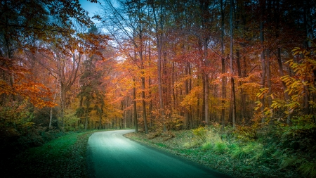 Limburg - Netherlands - vaals, roads, autumn, forests, trees