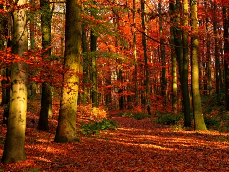 autumn in forest - forests, nature, autumn, trees, foliage