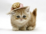 ginger kitten with a straw hat