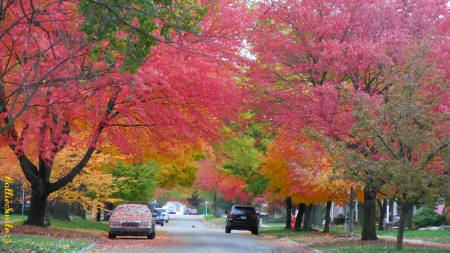 Autumn Avenue - maples, Stop sign, trees, leaf, leafs, light crimson red, cars, leaves, green, Fa11, light orange, Traffic Signals nSigns, branches, Autumn, golden yellow