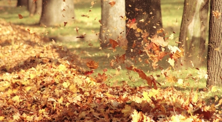 Autumn wind - leaves, autumn, park, nature, leaf, landscape, scene, fall, foliage, wallpaper