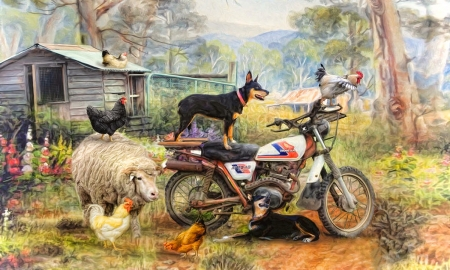 Kelpie Karetakers - rural, cute, sheep, Farm, chickens, Animals, motorcycle, dog, nostalgic