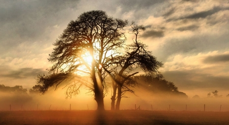 Fog across the field - sunlight, ranch, country, fog, mist, farm, sunrays, tree, nature, misty, field, scene, landscape, fall, foggy, autumn, sunset, wallpaper, sunrise