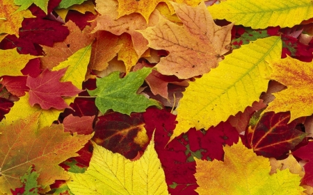 Autumn leaves - fallen, leaves, autumn, orange, golden, dry, russet