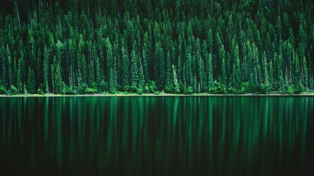 Green Forest Lake Pine Reflections - Forests, Lakes, Pine Trees, Nature, Reflections