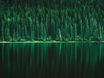Green Forest Lake Pine Reflections