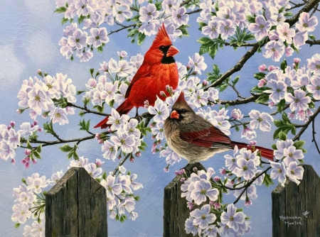 Spring - white, cardinal, blue, fence, red, abraham hunter, spring, blossom, bird, flower, painting, pasari, pictura, couple