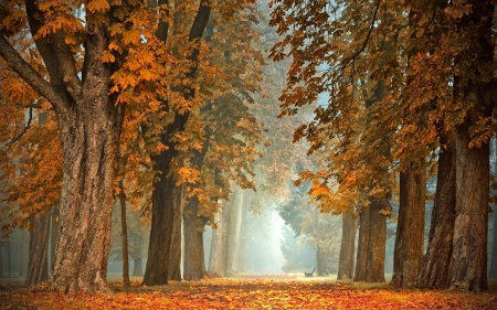 Chestnuts in Park - alley, trees, chestnuts, avenue, autumn, park