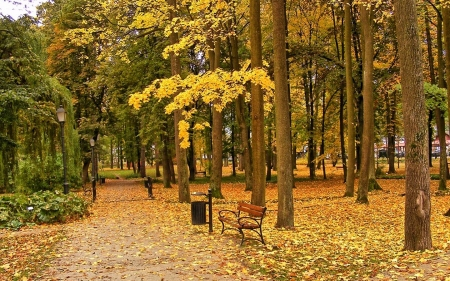Autumn in Krakow, Poland - park, trees, autumn, bench, Poland, Krakow