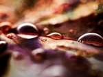 Raindrops on a fallen leaf