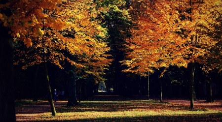 Autumn in a park - forest, fall, autumn, park, nature, wood, landscape, scene, wallpaper