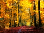 Walk in autumn forest