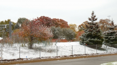 Autumn/ Winter Wonderland - brown, orange, snowy, shrubs, trees, green, snow, Fa11, co1d, shrub, evergreen tree, Autumn, white