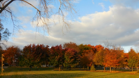 It's Fall After All! - Fa11, Autumn, trees, clouds, blue, grass, orange, golden, park, blue skies, twigs, branches