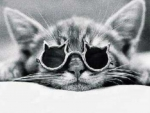Catty Coolness