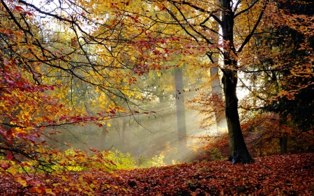 Autumn season - branches, trees, mist, foliage, forest, fall, autumn, colors, beautiful, leaves, season, scene