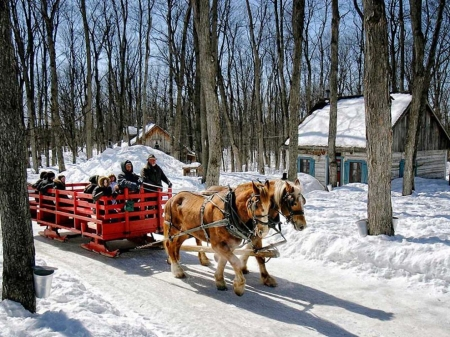 Sleigride - people, horses, forest, snow, painting, cabin, trees
