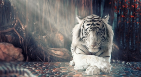 Zen - art, white tiger, tiger, wilderness, predators, wallpaper, wild, painting, wildlife, wild cats, prey, cats, wild animals, animals, big cats