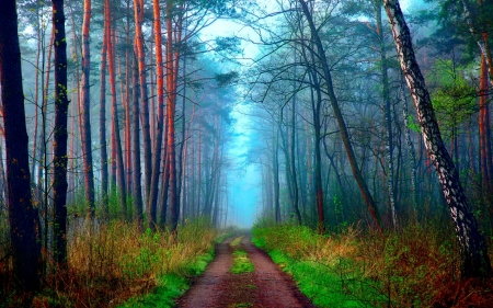 Dirt Road in Forest - road, trees, forest, path, dirt, nature, fog
