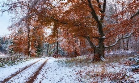 Between two seasons - park, season, cold, winter, fall, forest, autumn, beautiful, trees, foliage, snow, path