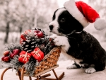 Christmas Puppy Shopping