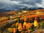 Autumn in Colorado,USA