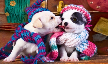 Holiday Kiss - cute, photography, holidays, love, funny, Dogs, kiss, winter, sweet