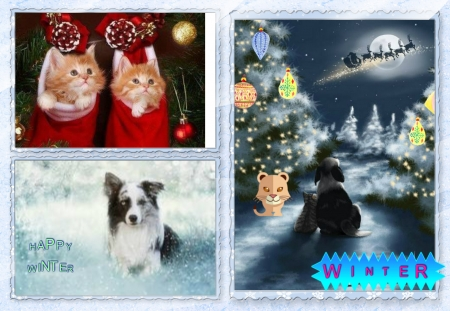 Winter - collages, cats, december, winter, cute
