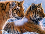 Painted tigers