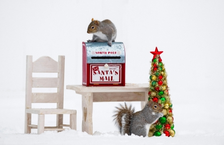 :) - tree, squirrel, veverita, christmas, craciun, funny, card, animal