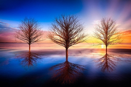 Spiritual Serenity - shadows, colors, sky, trees