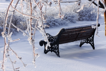 A bench in winter - winter, snow, ice, bench, beautiful, park, branches, frost