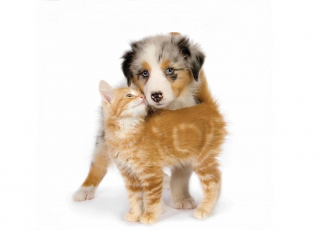 ♥ - couple, dog, animal, ginger, caine, cat, cute, pet, pisici, kitten, white, puppy