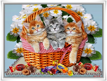 CATS AND FLOWARS - flowars, cats, animals, basket