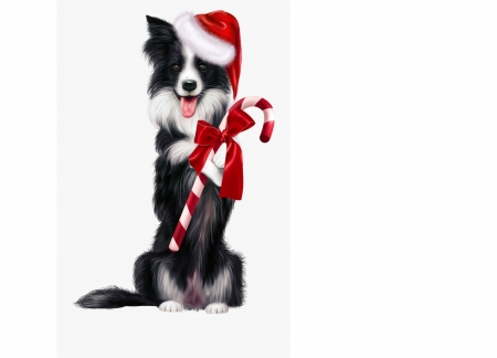 Merry Christmas! - black, white, card, red, candy, craciun, christmas, caine, cute, border collie, dog