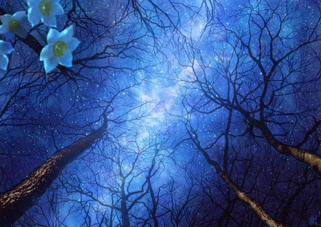 Spring night sky - stars, manga, spring, sky, view from the down, mocha, tree, anime, daffodil, flower, narcise, night, blue