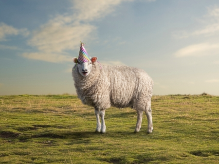 :) - sheep, oaie, green, oi, party, birthday, hat, animal
