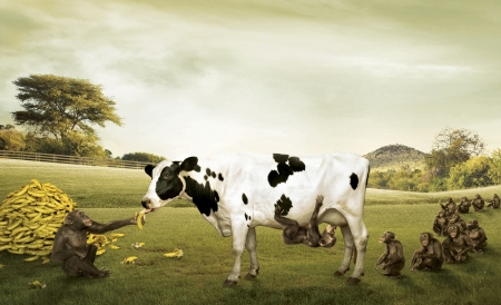 :D - commercial, vaca, milk, advertise, banana, maimuta, cow, add, fantasy, funny