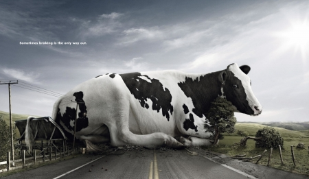 :) - cow, tree, add, vaca, commercial, road, advertise