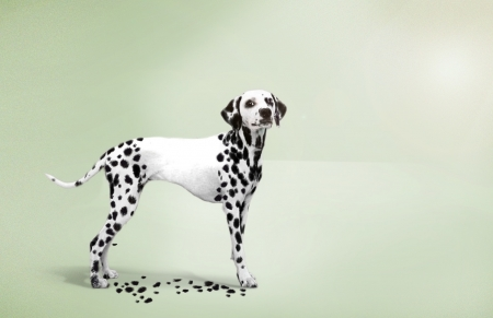 :D - dalmatian, dog, add, caine, funny, commercial, advertise