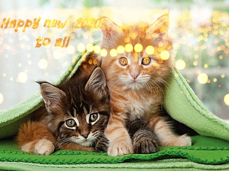 All the best - cute, lovely, holidays, cats, sweet