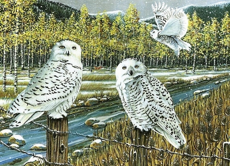 Snow Owls - raptors, forest, mountains, painting, birds, river, artwork