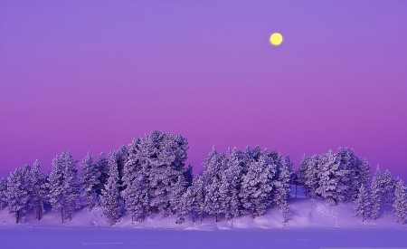 magical winter - scenic, trees, purple, winter