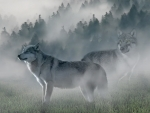 Wolves in The Mists